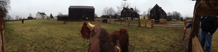 Dan the steer bumped into my iPhone while trying to take a panoramic shot of the Quaker homes!